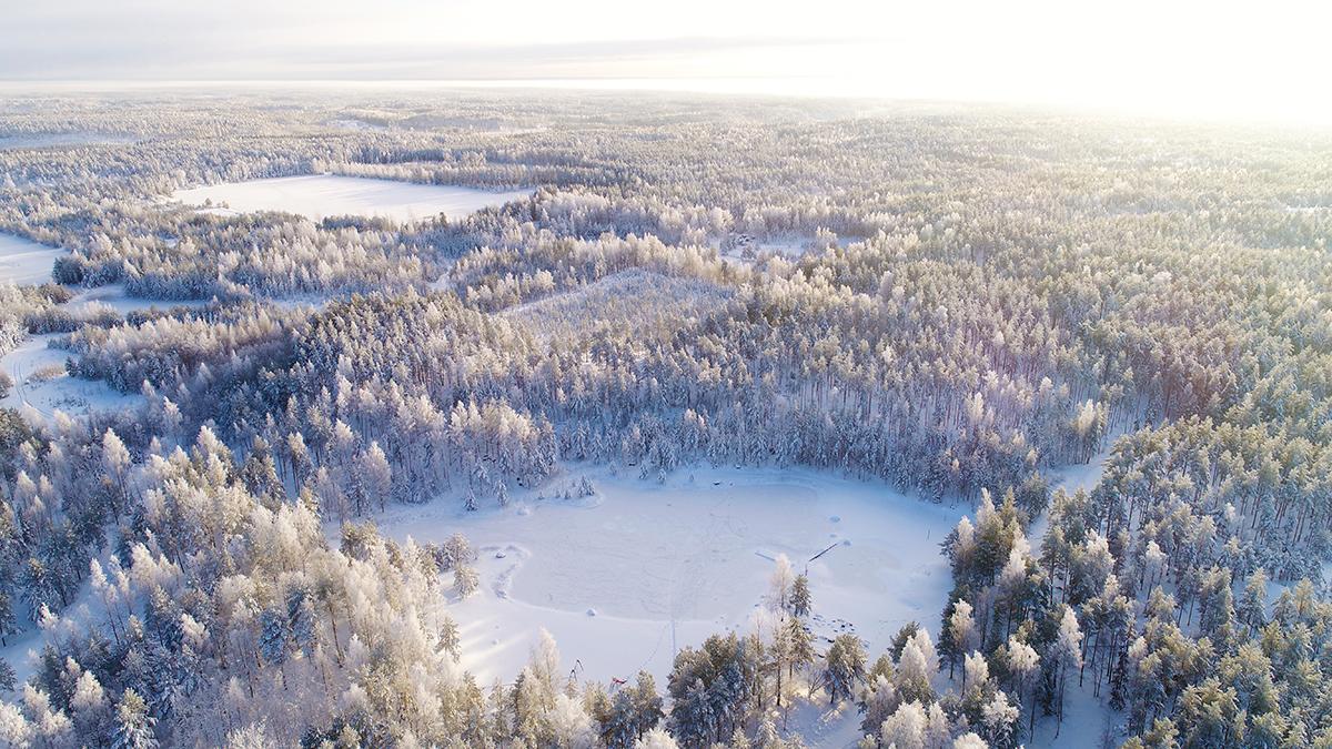 Talvinen metsä ilmakuvassa