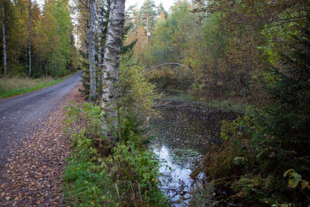 Narvijärven laskeutusallas tien vieressä.